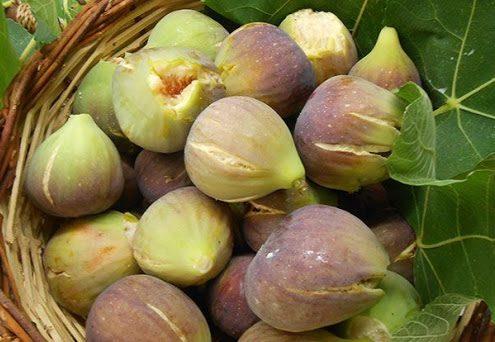 figs food