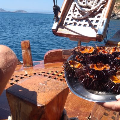 Hydra boat food sea urchin