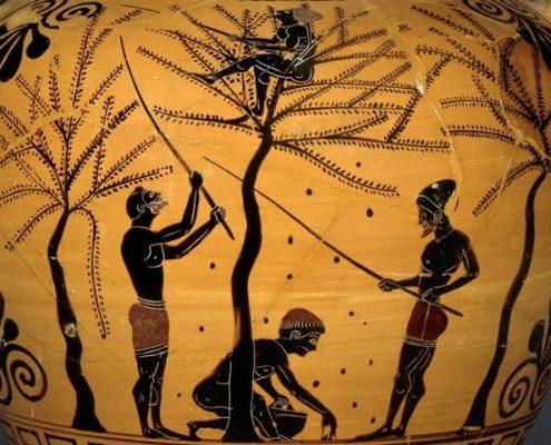 ancient greek people food olive
